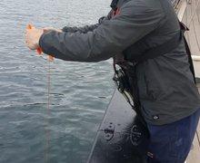 Day 7 crabbing